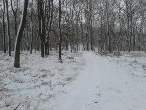 Кагарлик Кагарлык Kaharlyk Парк